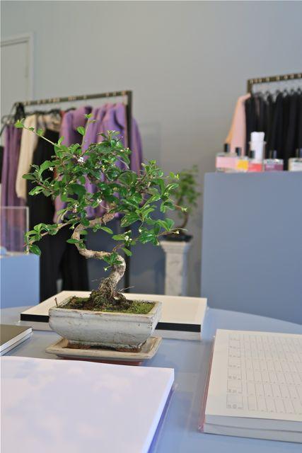 The Domestic Botanist Explore Utrecht 2