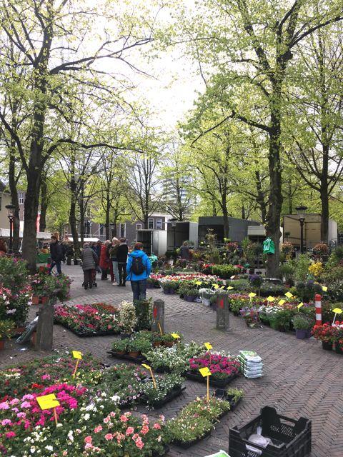 Explore Utrecht Bloemenmarkt 2
