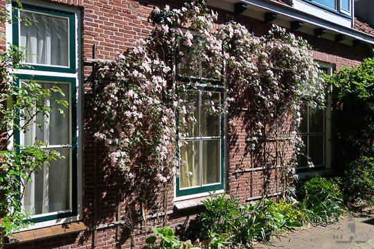 De Zeven Steegjes Tour Explore Utrecht-2